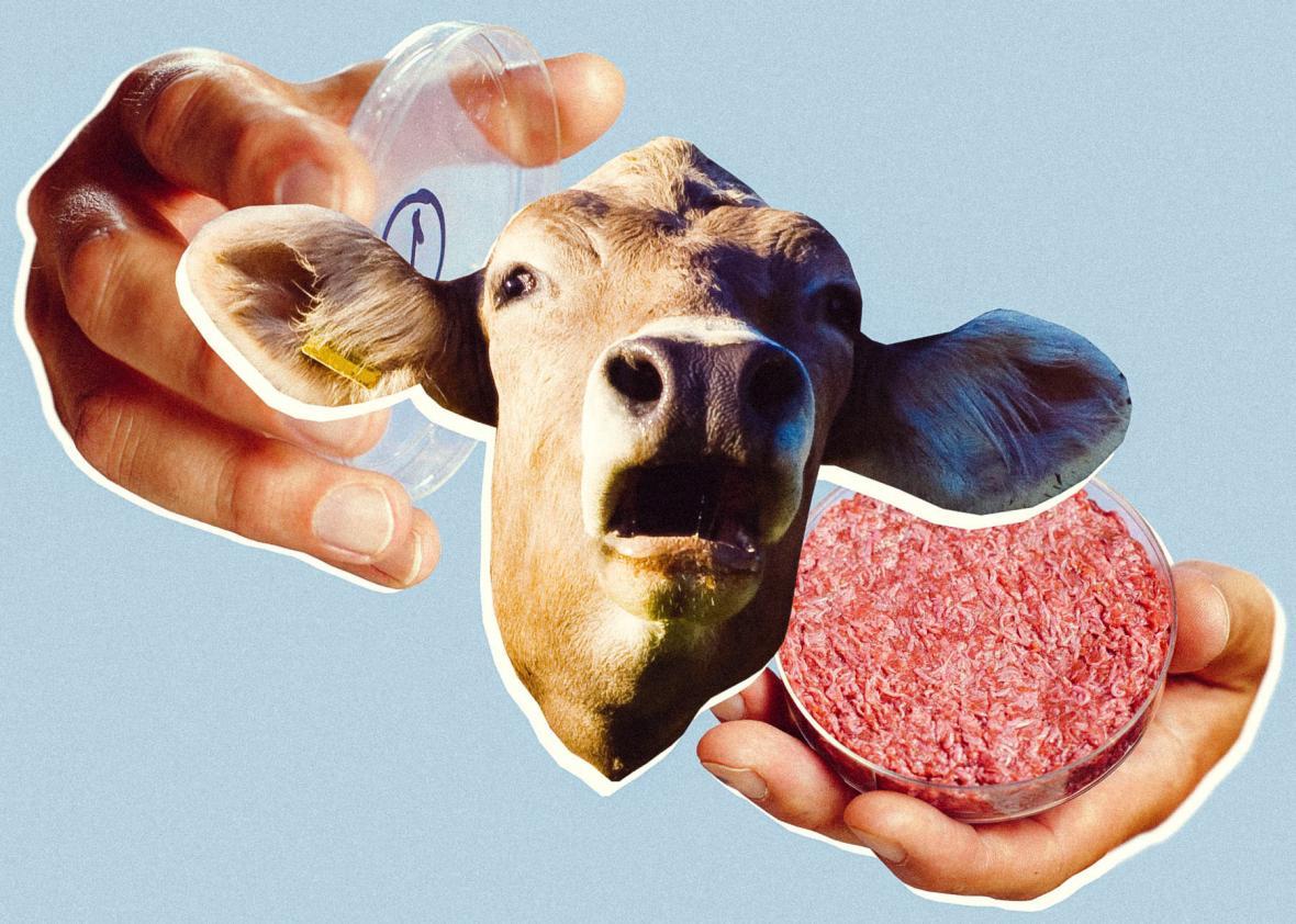 NO SLAUGHTER: Israeli Firm Creates 'Lab-Grown' Steak