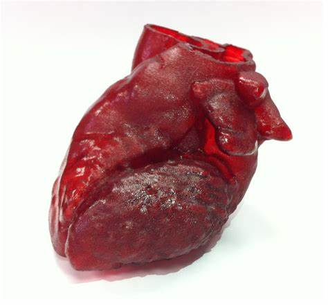 Israeli Researches Print 3D Heart Made Of Human Tissue